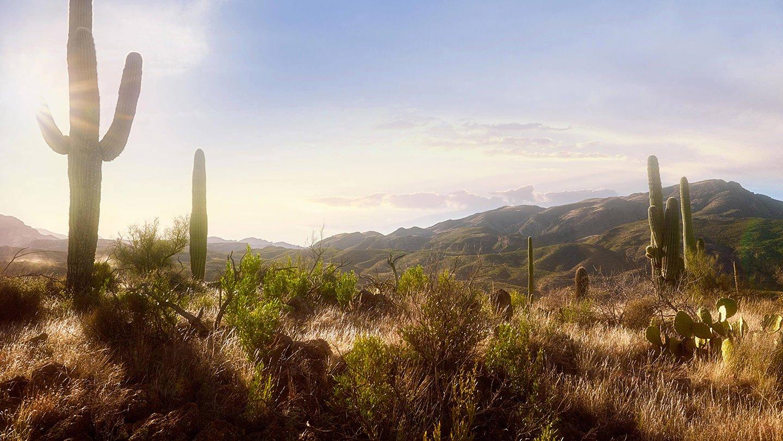 Scottsdale Landscape